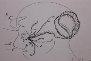 fg-clive-hambidge-new-brain-1-379976 10150589528667069 704277068 11379494 137508400 n
